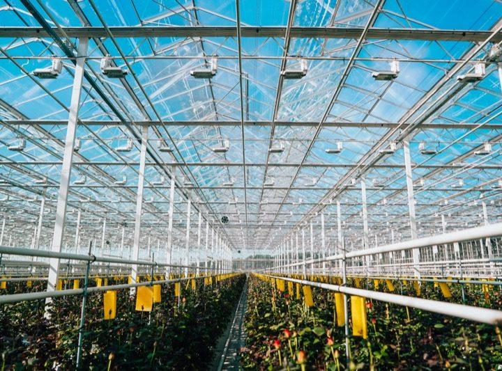 Roseraie Barth, le géant Alsacien spécialiste de la production de rosiers